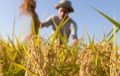 Liguria, Coldiretti: stop al pagamento IMU su terreni per agricoltori pensionati